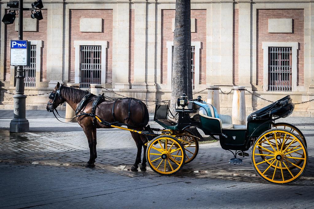PARKING SOLO PARA CARRUAJES DE CABALLOS / PARKING ONLY FOR HORSE CARRIAGE