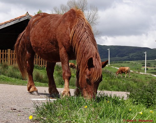 Bustamante, Cantabria, España.