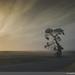 JDS_9331-web by Jon Schusteritsch