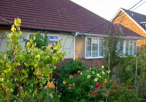 front garden in september - potager