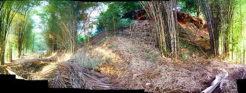 panorama photo bamboo stitching
