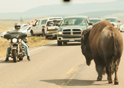 Stand off - Bison v motors-cyclist | by fernechino