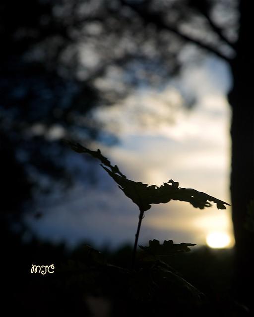 Lumière du soir en sous-bois... Evening light in the undergrowth ...