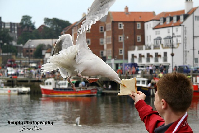 IMG_2644EN Feeding Seagull at Whitby