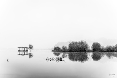 trees bw white lake black tree portugal nature water monochrome água fog composition reflections river de relax landscape geotagged photography flickr mood quiet foto natureza picture pb paisagem preto minimal serenity fotografia minimalism geotag reflexos aveiro árvores monocromático riverscape reflectionsonwater pateira fermentelos pauloveiga lens18200mm canon550d eosrebelt2i canonlens18200mm