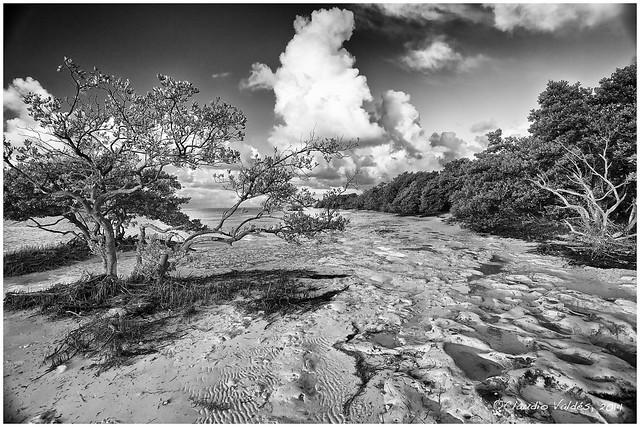 Isla Morada at Low Tide