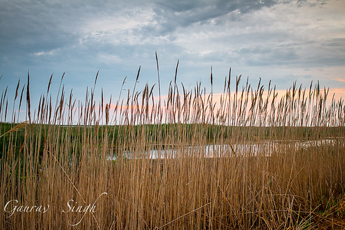 morning sky water clouds sunrise reeds dawn newjersey unitedstates swamp marsh galloway