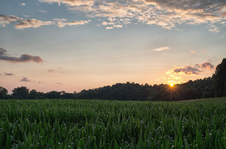 Cornfield at Sunset | by Vincent1825
