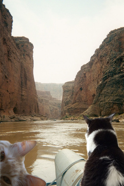 Canyon Cats