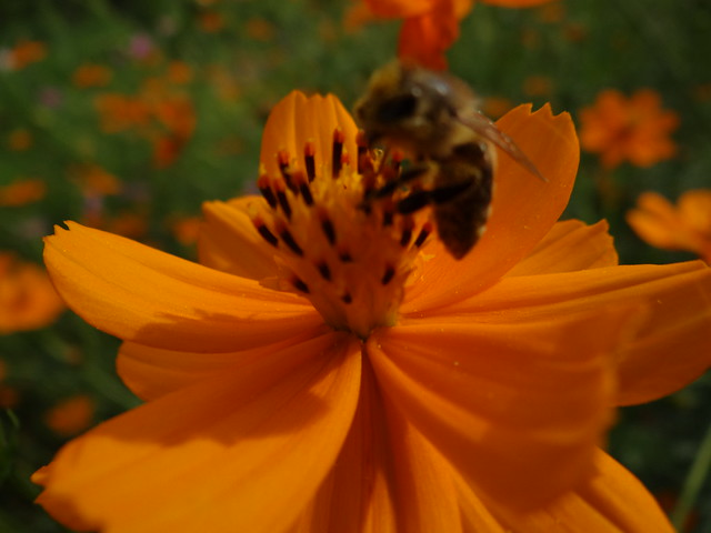 Botanischer-Garten-01308