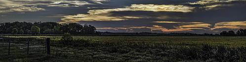 savannah ricefield dawn colorful sunrise panorama olympusomdem1