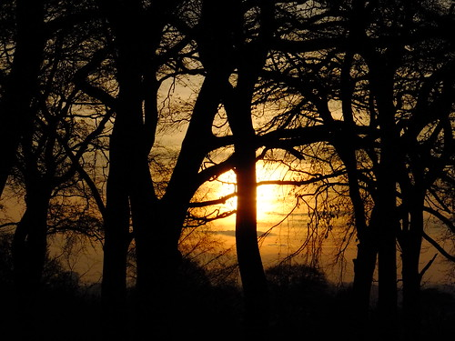 golden sunset trees silhouette leeds west yorkshire