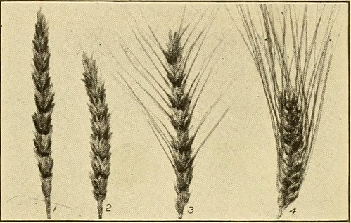 "Image from page 320 of ""The story of agriculture in the United States"" (1916) 