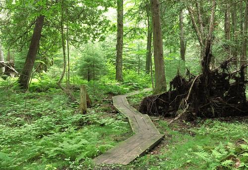michigan upperpeninsula deltacounty hiawathanationalforest canongx1 haymeadowcreektrail