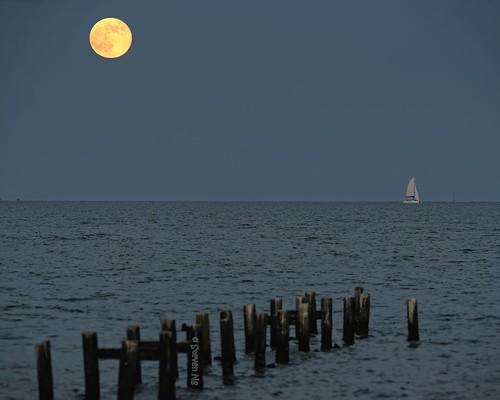 texas moonrise seabrook yellowmoon nikond800 clearlakeyachtclub galvestonbayarea sigma150500mmoshsm superfullmoon 2014supermoon abandonfishingpier supermoononhorizon supermoononclearlake supermoonongalvestonbay