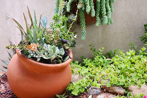 succulents in a pot in a garden | by ProFlowers.com