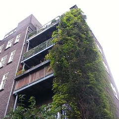 overgrown #konijnenstraat #amsterdam