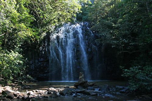 waterfall australia waterfalls queensland waterway freshwater tropicalnorthqueensland athertontablelands farnorthqueensland ellinjaafalls palmerstonhighway