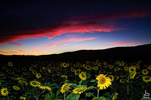 sunset red sky colors sunflower fusion onone hackettstown