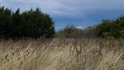 texas centraltexas motherneff motherneffstatepark moodytx nature hiking prairie