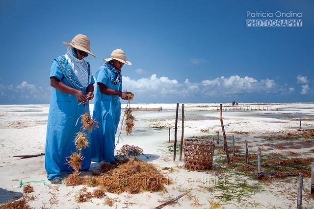 Seaweed farming in Zanzibar - L'exploitation des algues à Zanzibar