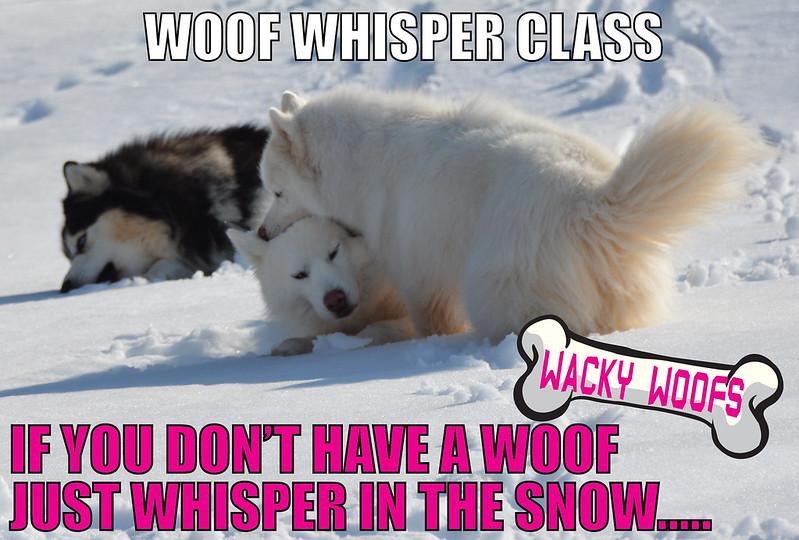 WOOF Whisper Class