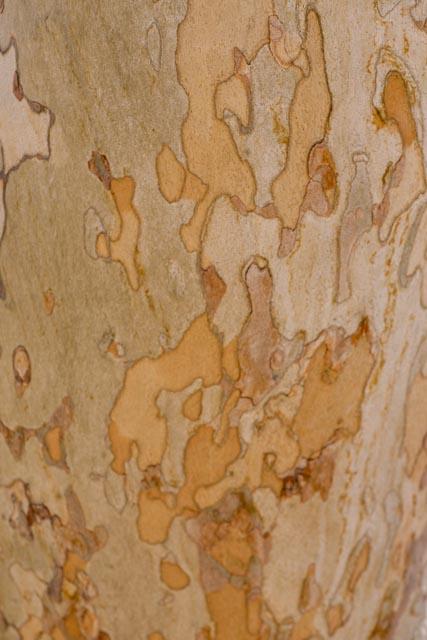 Interesting tree bark