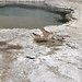 Slurp Geyser (Sawmill Group, Upper Geyser Basin, Yellowstone Hotspot Volcano, nw Wyoming, USA)