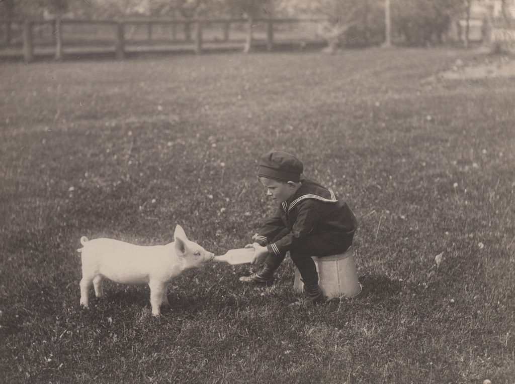 Little boy bottle feeding piglet, 1920