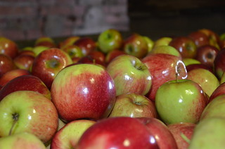 Apples @ Bonny Glen DSC_3577 | by Apple and Pear Australia Ltd
