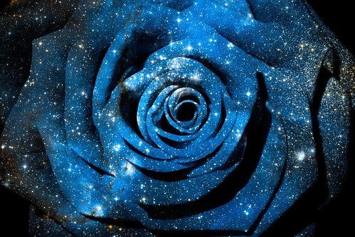 Cosmic Rose | by Bold Frontiers