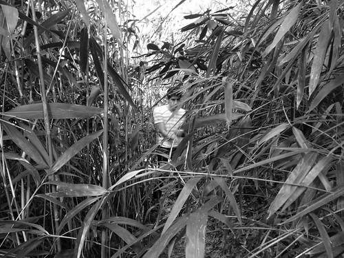 Bushwhacking in Dumbarton Oaks | by districtinroads
