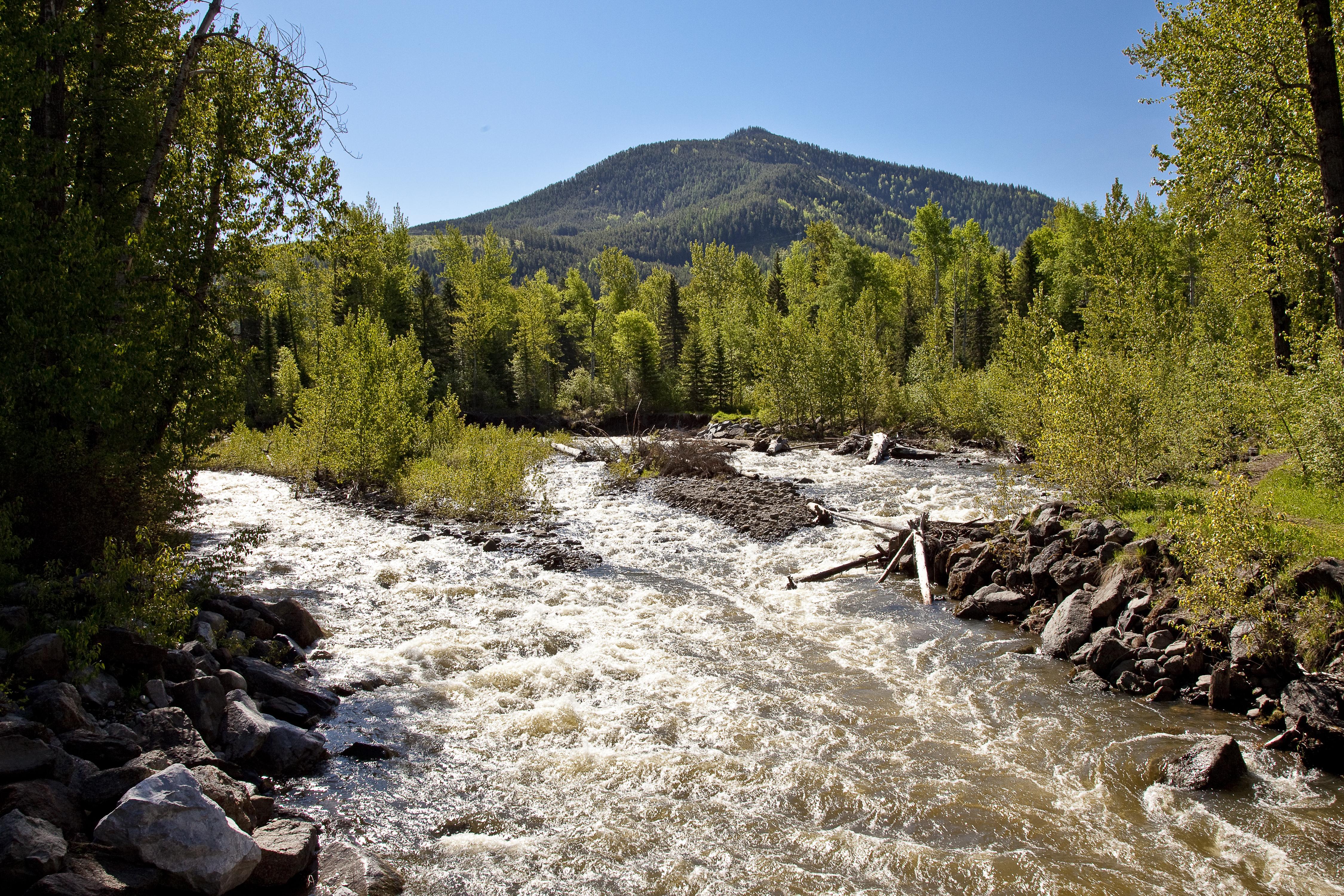 Montane Creek