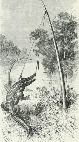 """Image from page 193 of """"América pintoresca; descripcion de viajes al nuevo continente por los mas modernos exploradores"""" (1884)"""
