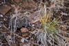 Montezuma quail by erikwahlgren
