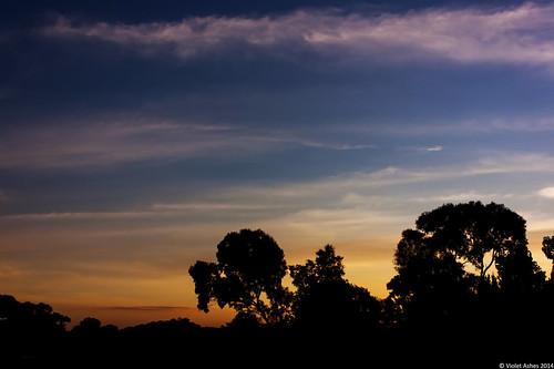 sunset silhouette canon sunsets australia southaustralia gawler canonphotography sunsetphotography canoneos450d sunsetaday violetashessunset corpril violetashessunsettumblrcompost86495427734sunset141