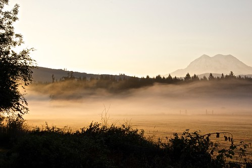 trees mist mountain color nature fog sunrise canon washington mt mount rainier eatonville t5i