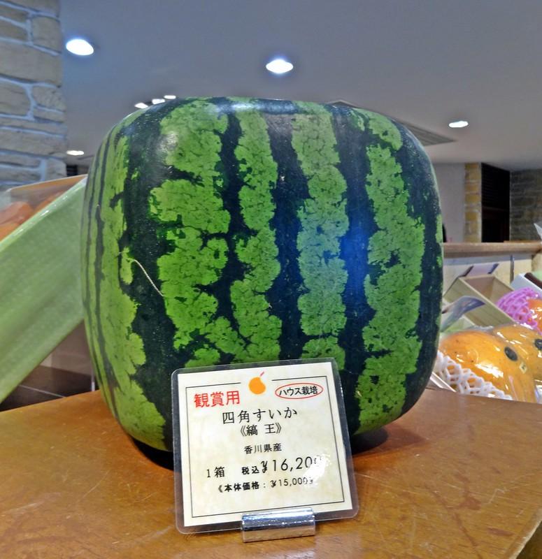 Square watermelon at Mitsukosi Department store Tokyo Japan