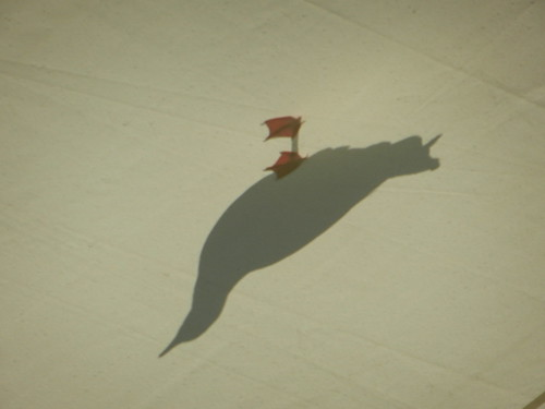 Seagull on marquee roof