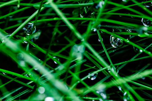 Dewdrops On The Grass