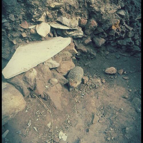 """ROMA ARCHEOLOGIA:  Il Foro o Tempio della Pace - Scavi (2014)   Foto: Archeologia Urbana e di Archeologia Medievale dell'Università di Roma Tre   """"Roma 3 Scavi"""" FACEBOOK (08 2014)."""