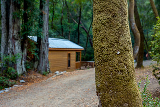 Madrone Cabins, Samuel P. Taylor State Park | by Weekend del Sol