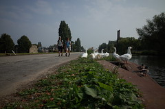 geese [Ricoh GR]