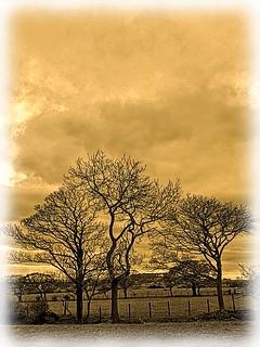 Trees in field near Lower Green Bank | by simeonorme
