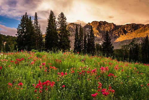 morning red orange mountain green sunrise landscape utah cloudy canyon cliffs wildflowers pinetrees littlecottonwood orangeglow albionbasin d7100 redwildflowers