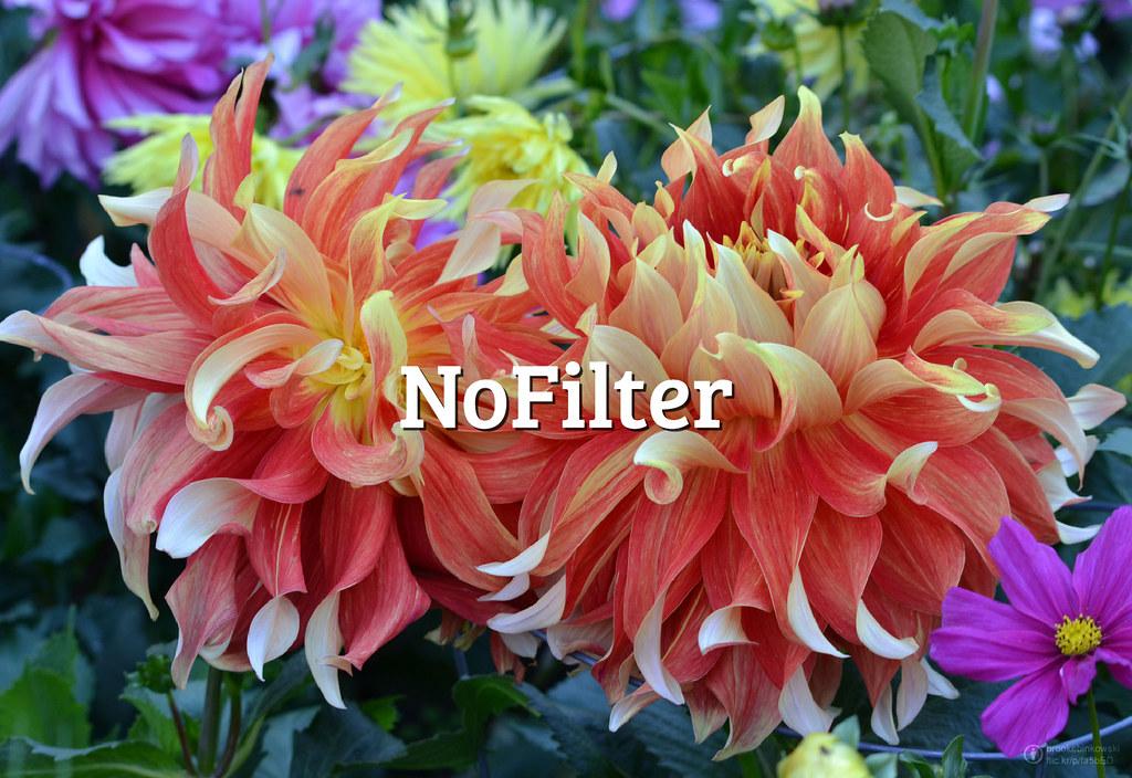 #FlickrFriday: #NoFilter