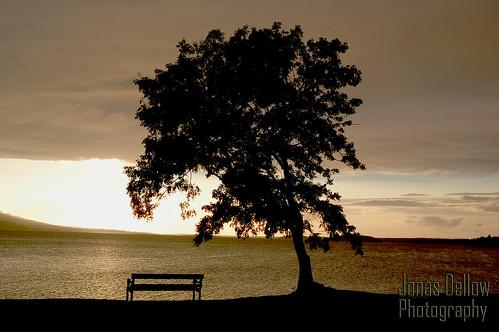 sunset lake tree silhouette bench lough melvin jonasdellowphotography