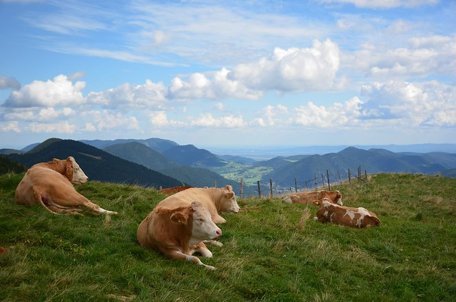 Alpi vissid