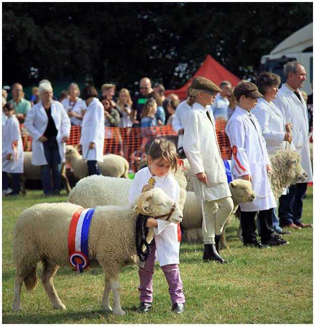 Findon Sheep Fair 2014: Little lamb & sheep