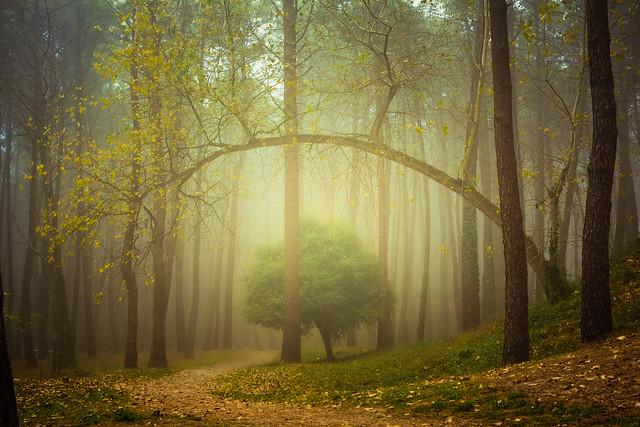 Fog & Woods (Explored)